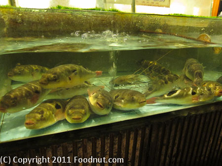 Shi Qi Lao Zhongsan China Fish Tank