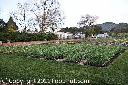 The French Laundry Yountville garden 1
